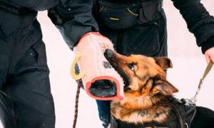 Охрана с собакой